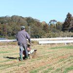 水田利活用/麦の成育順調