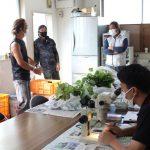 イチゴ定植に向け花芽検鏡開始!